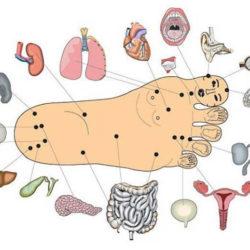Изучение рефлексогенных зон стоп для возможности похудения