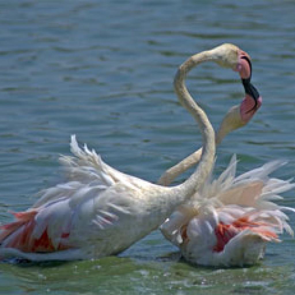 поцелуй птиц