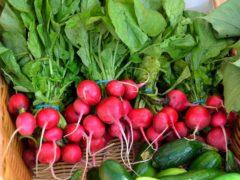 Полезны ли ранние овощи для питания