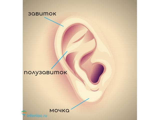 Завиток ушной раковины