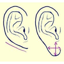 Уши – зеркало вашего характера и здоровья